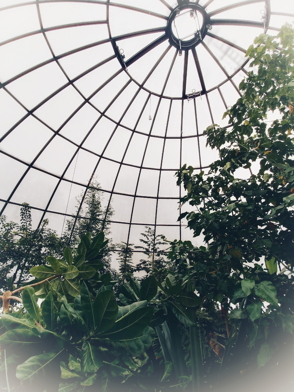 Šetnja kroz Botaničkubaštu