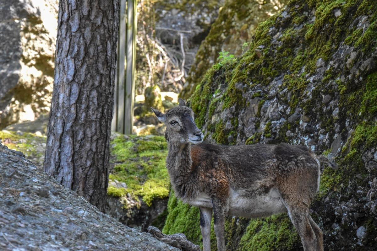 Magični životinjski park koji nadahnjuje, budi i očarava na prvikorak