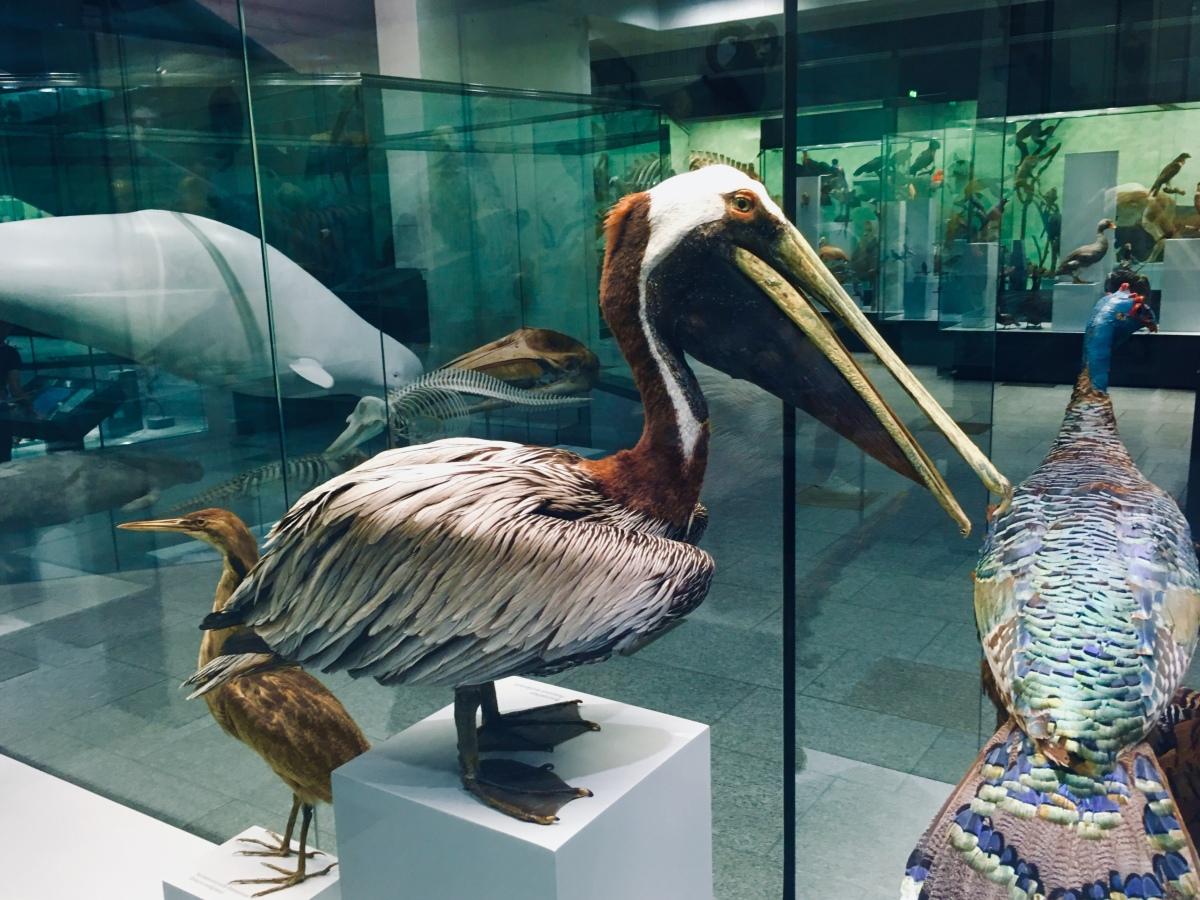 U poseti prirodnjačkommuzeju